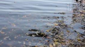 Basura en una orilla del lago, contaminación de agua almacen de video
