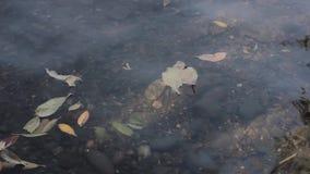 Basura en una orilla del lago, contaminación de agua almacen de metraje de vídeo