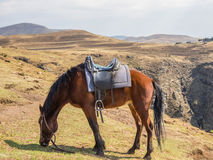 Basuto pony or horse grazing peacefully in the mountains of Lesotho, Africa.  Stock Photos