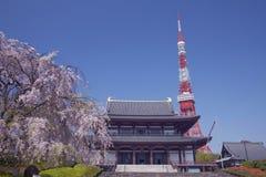 basztowy Tokyo czereśniowy świątynny drzewo zdjęcie royalty free