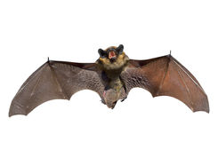 Bat 1 Stock Photos