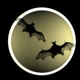 Bat Stock Photography