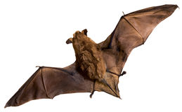 Bat stock photos