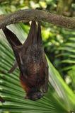 A Bat Stock Image