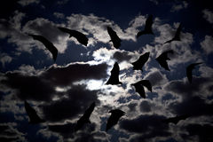Bat. Flying in the dark cloudy sky Royalty Free Stock Images