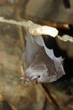 'bat' Images stock