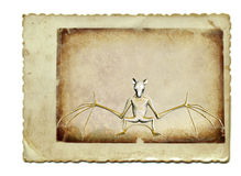 The bat Royalty Free Stock Photo
