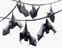 'bat' Photo libre de droits