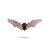 Bat abstract Stock Photo