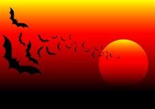 Bat africa Stock Image