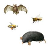 Bat, Bees, and Mole. Bat, Bees, Mole. Isolated illustration white background Royalty Free Stock Images