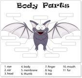 Bat body parts. Animal anatomy in English Stock Photos