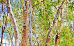Bat Box in the Australian Bush Stock Image