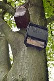 Bat Box and Bird house. Bat box and Birdhouse installed n a tree in the forest Stock Photography
