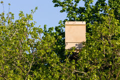 Bat Box among Tree Branches. Wooden bat box among the branches of a tree Stock Images