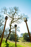Bat Boxes Stock Images