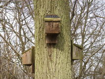 Bat boxes attached to tree Royalty Free Stock Photos