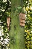 Bat boxes on tree. Stock Photos
