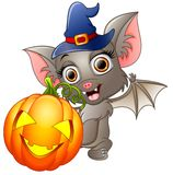 Bat cartoon with a witch hat and pumpkin Stock Images