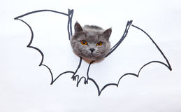 Bat cat Royalty Free Stock Images