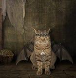 The bat -  cat. Royalty Free Stock Photos