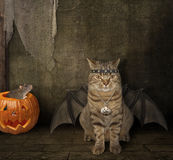 The bat -  cat. Royalty Free Stock Images