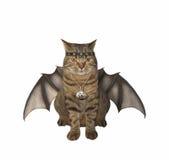 The bat -  cat. Royalty Free Stock Photography