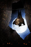 Bat in cave. A large brown bat hanging in a cave with the moon shining on a starry night. Scary eyes glow at the bottom of the cave. Concept for Halloween royalty free stock photography