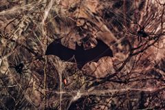 Bat and cobwebs. halloween. Bat and cobwebs.the background for halloween Royalty Free Stock Photo