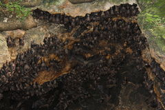 Bat colony Stock Images