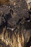 'bat' dans la caverne Photos libres de droits