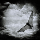 Bat in the dark cloudy sky, halloween background Stock Images