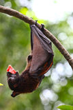 Bat at dinner Stock Images