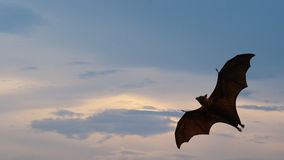 Bat flying. As Halloween background Royalty Free Stock Photos