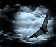 Bat flying in the dark sky. Bat flying in the dark cloudy sky Royalty Free Stock Image