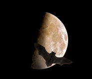 Bat flying in front of the moon - halloween Stock Images