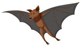 Bat flying on white background Royalty Free Stock Image