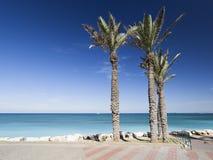 Bat Galim promenade. Galshanim beach. Haifa. Israel. of Bat Gali. Palm trees and paving of Bat Galim promenade. Galshanim beach. Haifa. Israel stock image