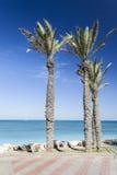 Bat Galim promenade. Galshanim beach. Haifa. Israel. of Bat Gali. Palm trees and paving of Bat Galim promenade. Galshanim beach. Haifa. Israel stock photography