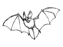 Bat Stock Photography