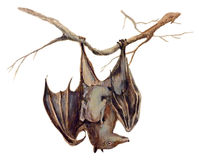 Bat - An hand painted illustration on white Stock Photo