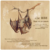 Bat - An hand painted vector, converted Royalty Free Stock Image