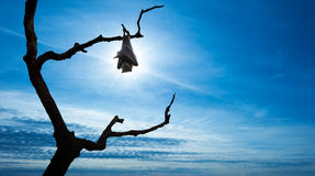 Bat hanging on tree branch over blue sly. Halloween background with flying bat over bright sky Stock Images