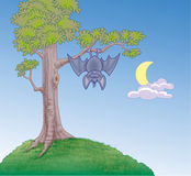 Bat hanging from a tree Royalty Free Stock Photos