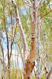 Bat House Box. Bat house nesting box isolated in a tree trunk and green leaf nature setting with a blue sky background Royalty Free Stock Image