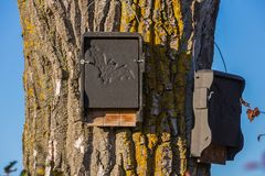 Bat protection house on a tree. Bat house for shelter on a tree Royalty Free Stock Image