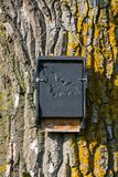 Bat house on a tree. Bat house for shelter on a tree Stock Images
