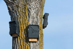 Bat houses. On a tree Royalty Free Stock Photography
