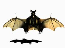 Bat illustration Stock Photography