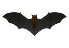 Bat isolated on white background,  Stock Photos